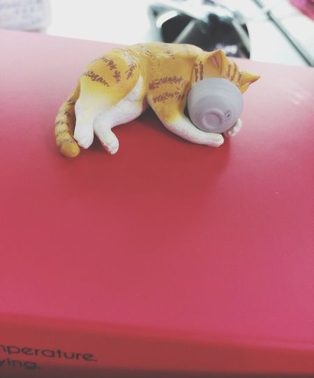Funny Toys Cat Amimals