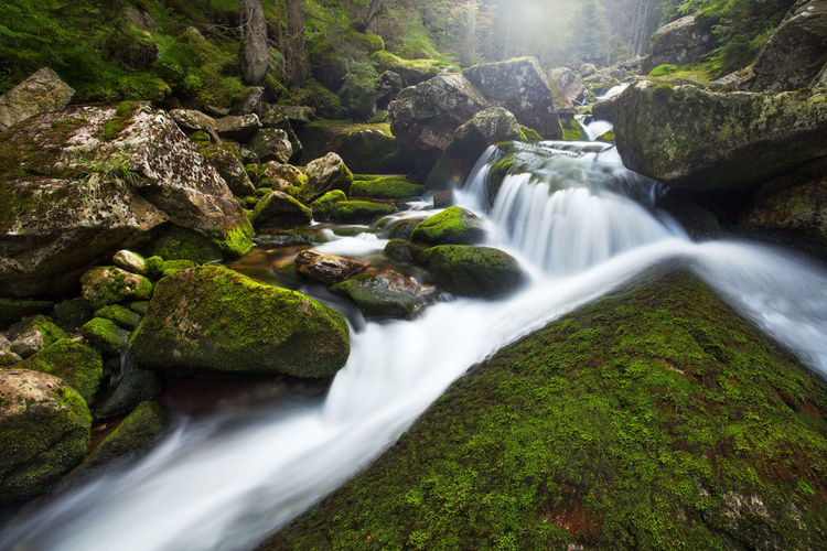 Beautiful landscapes from Retezat Mountains, Romania. Creek Flow  Flowing Forest Fresh Green Landscape Moss Mountain Natural Nature Outdoor Park Peacefull Plants River Stone Stream Tree Trees Water Waterfall Wild Wilderness Woods