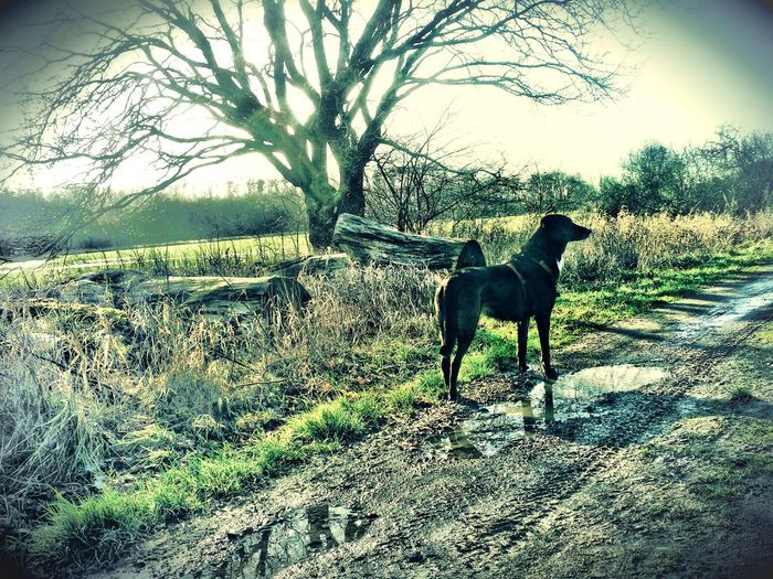 After The Rain Clouds Of Haze and Sunrays Rain Puddles you can see the Fresh Air And Sunshine DogWalkingAdventure Big Dog No Leash Nature On Your Doorstep Bare Trees Silhouettes Showcase March Springtime Is Coming