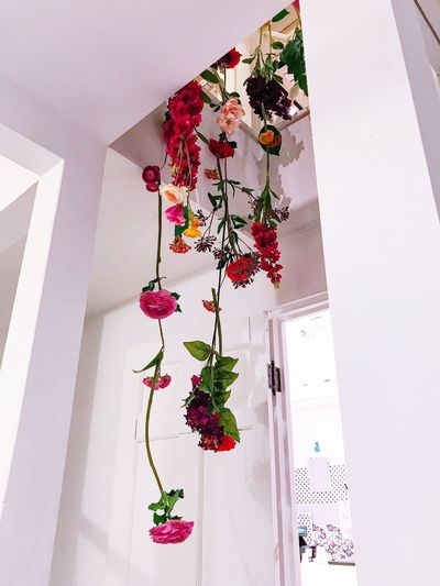 Flowers at home Bright Colors Hanging Decoration Indoors  Built Structure Architecture Plant White Color Flower Flowering Plant Sunlight Floral Pattern Ceiling