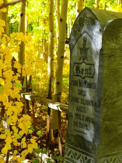 Cemetery Fall