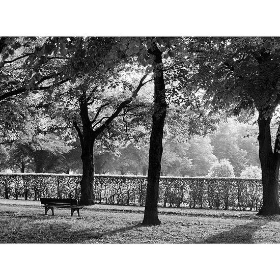 Beautiful Nature . At the Hofgarten . München munich Germany Deutschland. Taken by my sonyalpha dslr a57. حديقة طبيعة ميونخ بافاريا المانيا