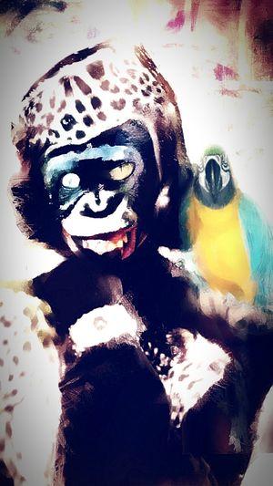 Monkey Peroquet Bestfriend Group Of People ArtWork Digital Composite Portrait Etc Leopard Multi Colored Close-up