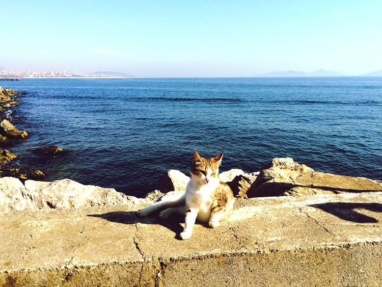 IPhoneography Popular Photos Travel Photography Sea Cat Sunshine Turkey Animals Relaxing Peace