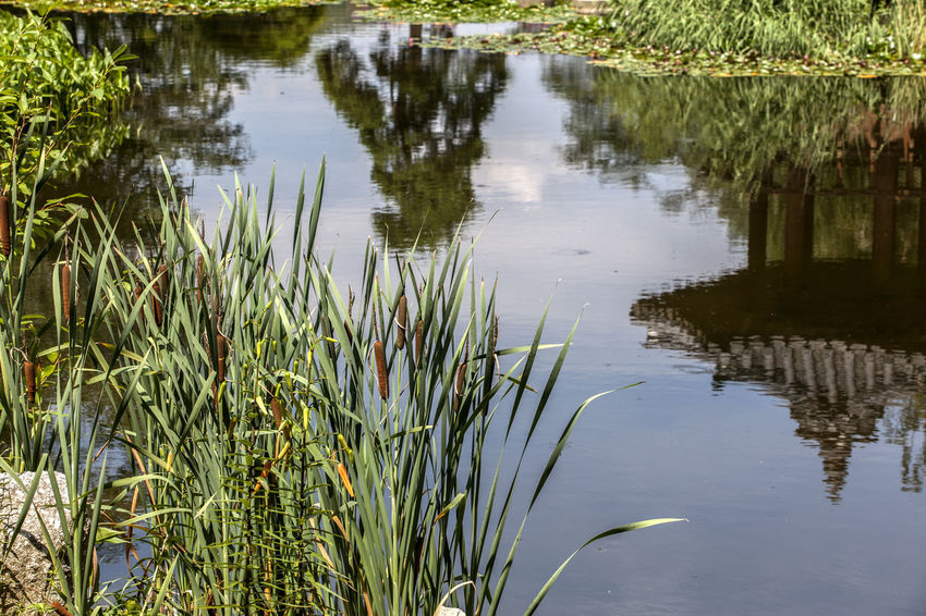 Arboretum Beauty In Nature Calm Day Gapyung Grass Green Color Growing Growth Idyllic Lake Lakeshore Morning Calm Arboretum Nature No People Non-urban Scene Outdoors Plant Reflection Rippled Scenics Standing Water Tranquil Scene Tranquility Water