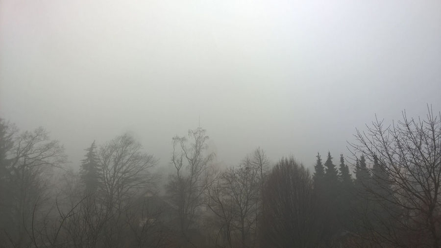Foggy New Year Fog Foggy Foggy Morning Nebel Neujahrsmorgen New Year Outdoors Tranquility