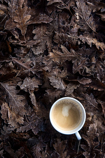 Coffee Coffee From Above  Brown Close-up Coffee - Drink Coffee Cup Coffeetime Day Directly Above Drink Freshness Good Morning High Angle View Leaf Nature Neutral Tones No People Outdoors Food Stories