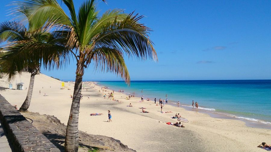 Fuerteventura Holiday Canaries Islands Fuerteventura Fuerteventuraexperience Relax Relaxing Blue Sky Sea Tree Water Palm Tree Sea Beach Sand Blue Summer Wave Beauty Coconut Palm Tree Beach Holiday Seascape Coastline Island Ocean