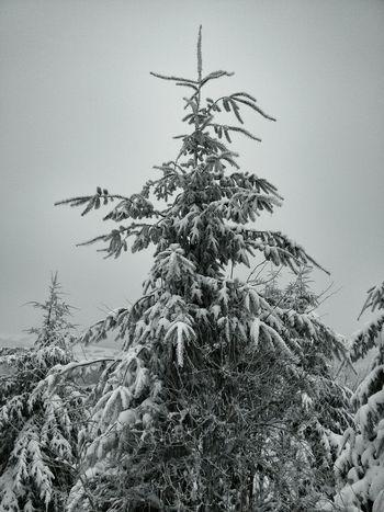 Nevado. Landscape O Cebreiro Snow Neve Galiza Inverno