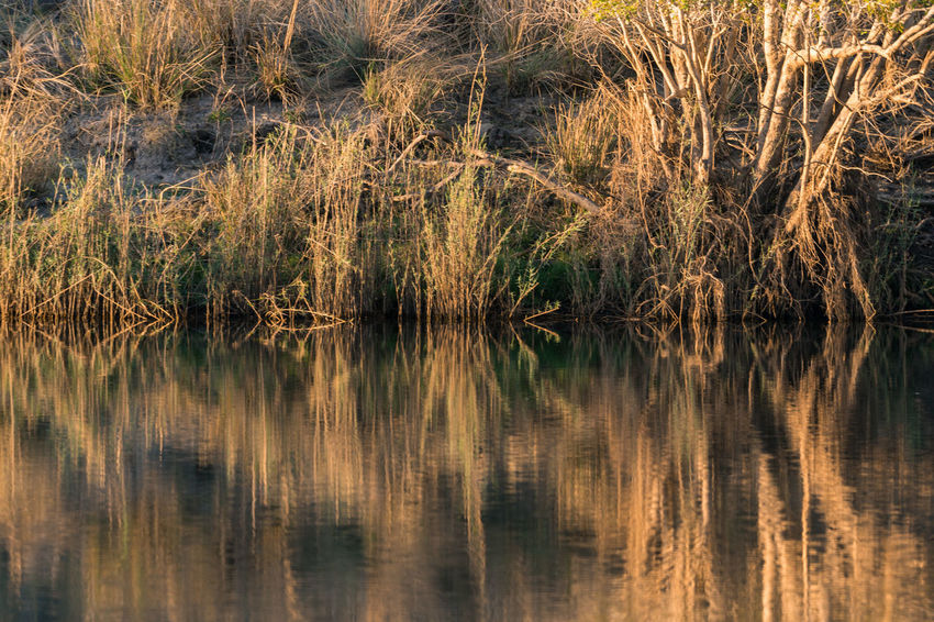 Beauty In Nature Dawn Grasses Grasses And Sun Morning Nature Patterns In Nature Reflection Riverfront Symmetry Tranquil Scene Tranquility Water