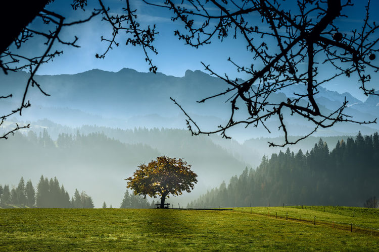 Beauty In Nature Cloud - Sky Day Landscape Mountain Nature No People Outdoors Pinaceae Pine Tree Sky Tree