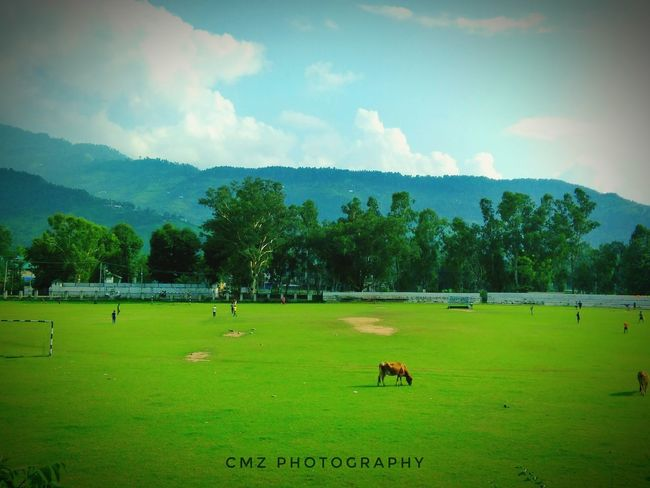 Grass Playing Field Sport Cloud - Sky Agriculture Field Soccer Tree Green Color Nature Sky Domestic Animals Livestock Outdoors Soccer Field Day Mammal No People Beauty In Nature Animal Themes