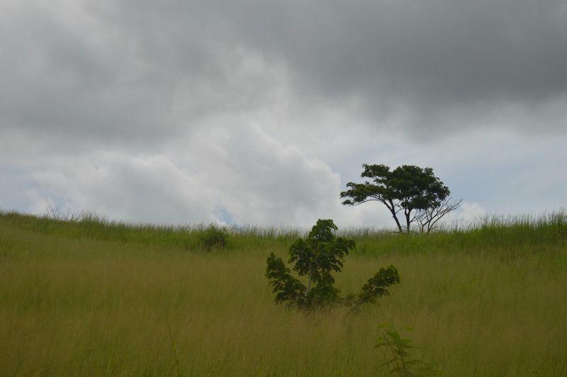 Unedited Eye Em Nature Lover Taking Photos Hello World Enjoying Life