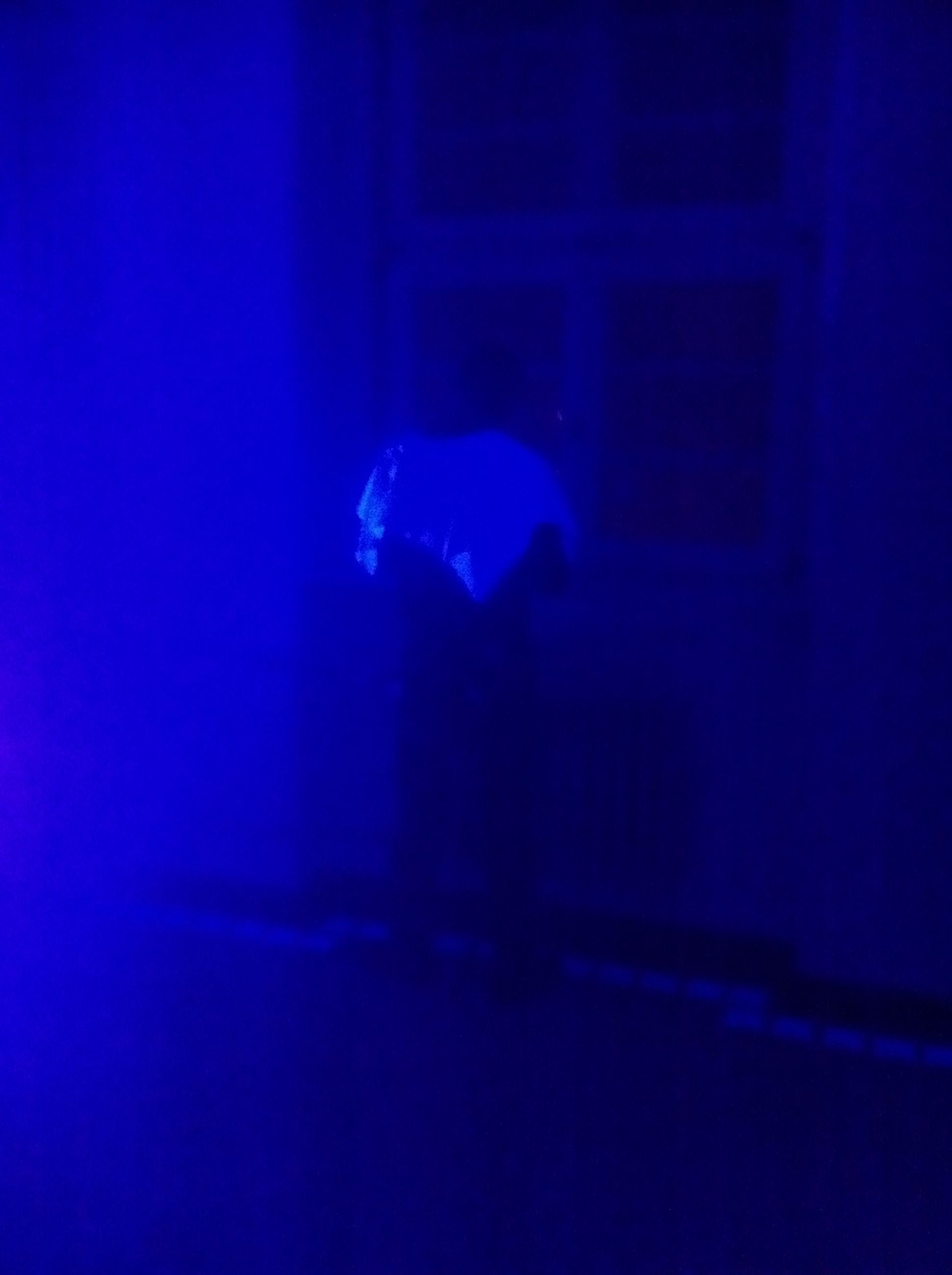 blue, lifestyles, indoors, leisure activity, men, illuminated, night, unrecognizable person, full length, rear view, silhouette, light - natural phenomenon, underwater, person, skill, standing, arts culture and entertainment, music