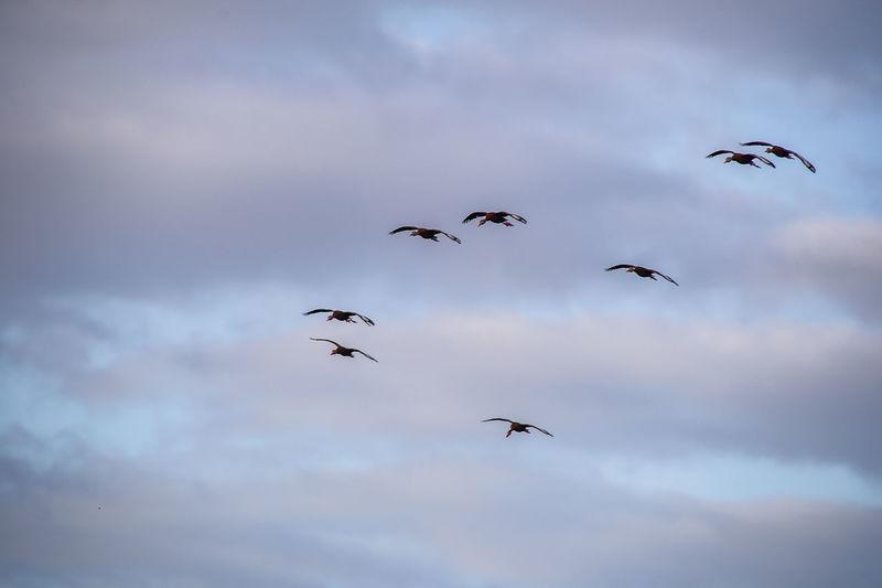 Wildlife Flying