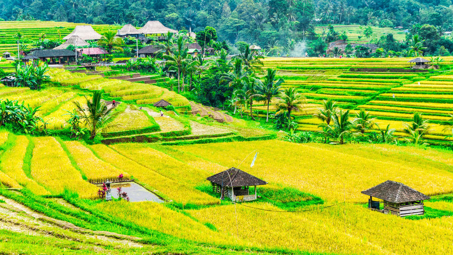 Jatiluwih Rice Terrace 4 Bali INDONESIA Jatiluwih Rice Terrace UNESCO World Heritage Site Agriculture Cereal Plant Cultures Day Farm Field Green Color Growth Hut Landscape Nature Outdoors Rice - Cereal Plant Rice Paddy Rural Scene An Eye For Travel