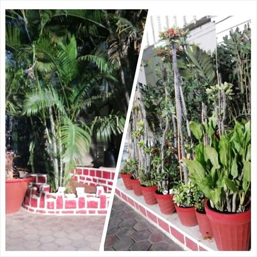 These beautiful plants made by the Great(ALLAH). Plants Abstract Greeneverywhere Sidharfunctionpalace