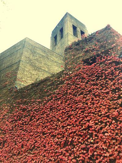 Sube el otoño