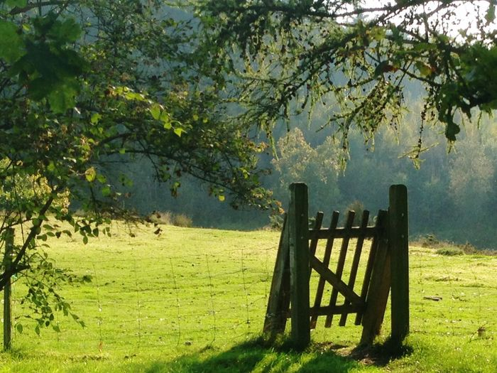 Gate Denmark Autumn Sunshine Woods Forrest Green Green Color Plant Tree Nature Green Color Tranquility Growth Day No People Beauty In Nature Grass Wood - Material Sunlight Field Tranquil Scene Scenics - Nature Land Outdoors A New Beginning A New Beginning A New Beginning