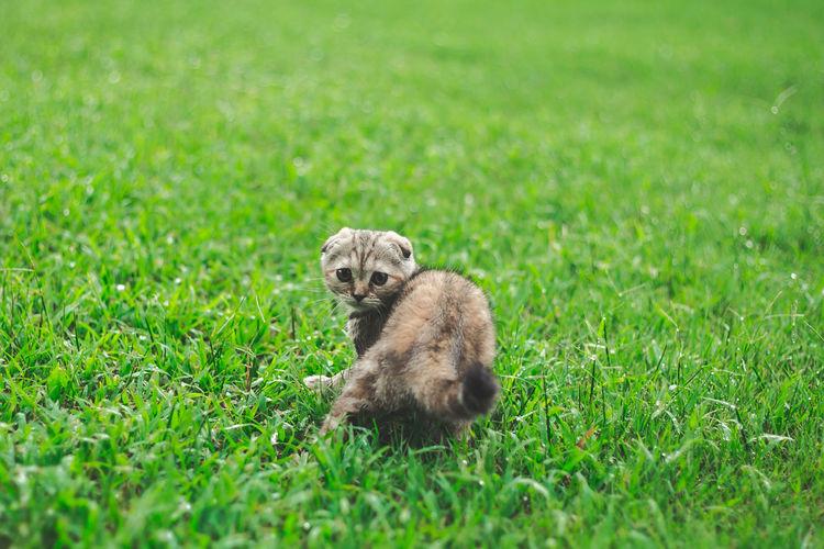 Portrait of lion sitting on grass