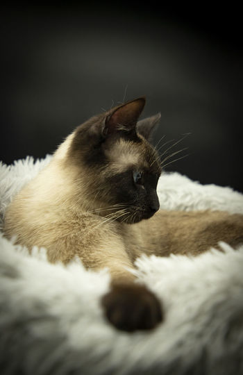 Close-up of cat relaxing on bed