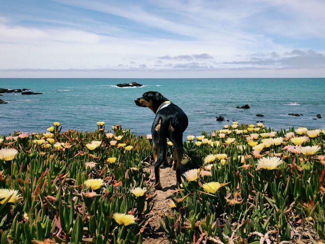 Dog flowers beach Sea Water Beauty In Nature Sky Plant Horizon Over Water Horizon Outdoors