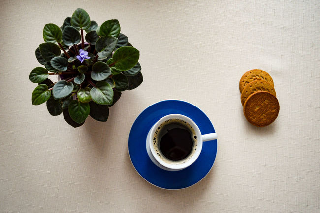 Sunday coffee Close-up Coffee - Drink Coffee Cup Drink Freshness Table Food And Drink High Angle View Indoors  Healthy Eating Flower Head Flower Still Life Fragility Bisquit Arrangement Fresh On The EyeEm Minimal Minimalism Simplicity