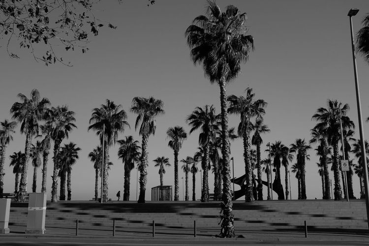 Black And White Blackandwhite Day No People Outdoors Palm Tree Pattern Repetition Scenics Tree Tree Trunk