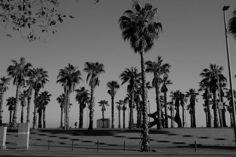 Black And White Blackandwhite Day No People Outdoors Palm Tree Pattern Repetition Scenics Tree Tree Trunk My Best Photo