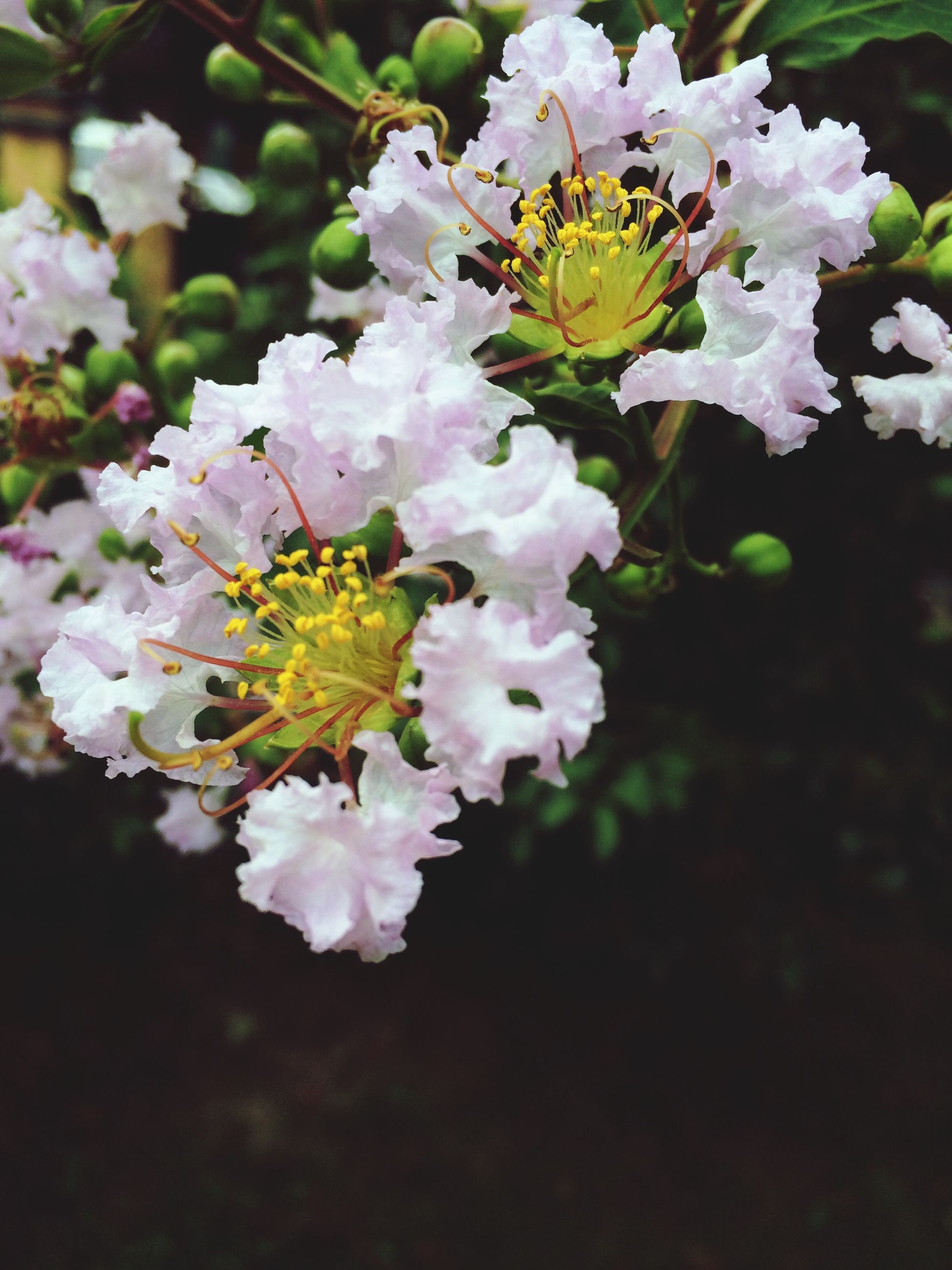 flower, freshness, fragility, petal, growth, beauty in nature, flower head, nature, blooming, in bloom, blossom, close-up, focus on foreground, plant, white color, botany, park - man made space, bunch of flowers, springtime, leaf