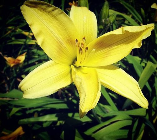Af_floral➡🌼flowers Af_macro➡🔎macro Yellow Flower Nature Cornwallpark 9Vaga_ColorYellow9 Ig_4every1_yellow