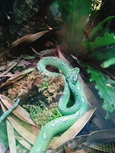 Reptile Snake Green