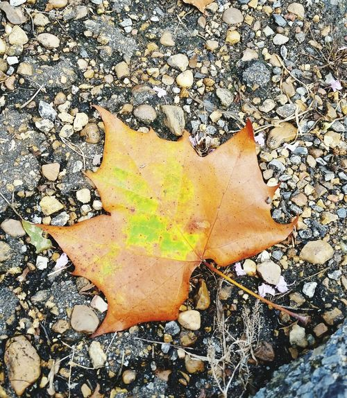 Leaf Leaf 🍂 Leaves Leafphotography Orange Orange Leaf Green Green Color Green Leaf Orange Color Rocks Rocks And Leaves Ground Grounded Fall Fall Beauty Fall Colors Fall Leaves Fallen Leaves Fall_collection Fall Season Autumn Autumn🍁🍁🍁 Autumn Leaves Autumn Colors