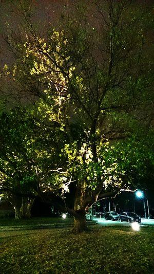 Night trees EyeEm Best Shots Trees Night View Take A Walk Enjoying Life 國立臺灣大學 National Taiwan University  Weekend Nature Tourists