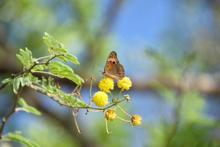 Close-up of butterfly pollinating flower