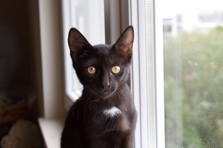 Cat Cats Of EyeEm Black Kitten Black Cat Staring At The World Staring Window Appartment View Domestic Animal Pets One Animal No People Day Domestic Animals Curious Sad Domestic Cat Animal Themes Feline Portrait Close-up Looking At Camera