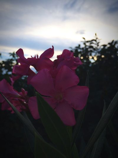 Flowers Croatia