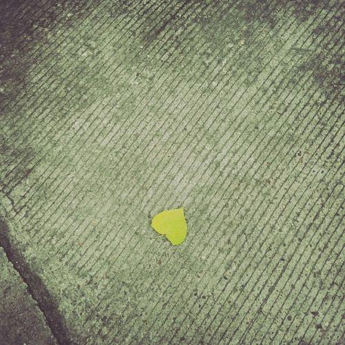 摆拍。 树叶 Leafage Leaf Summer yellow sunset instadaily instamood instagood picoftheday bestoftheday