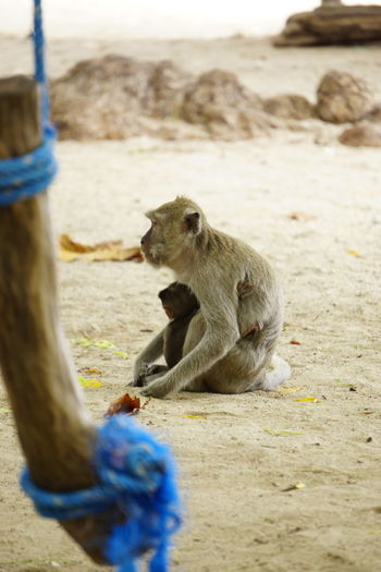 Close-up of monkey sitting on sand at beach
