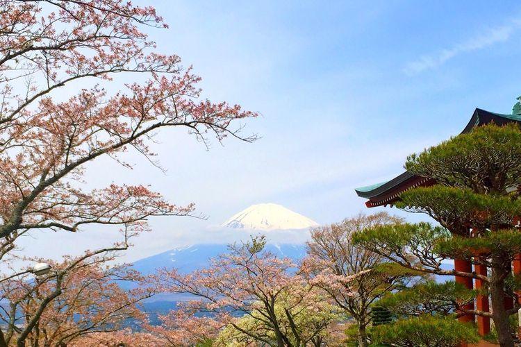 Nature Tree Mountain Beauty In Nature Sky EyeEm Beautiful Colors Hello World Flower Nature Enjoying Life