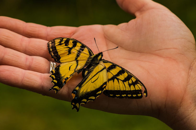 Cropped hand of person holding butterfly