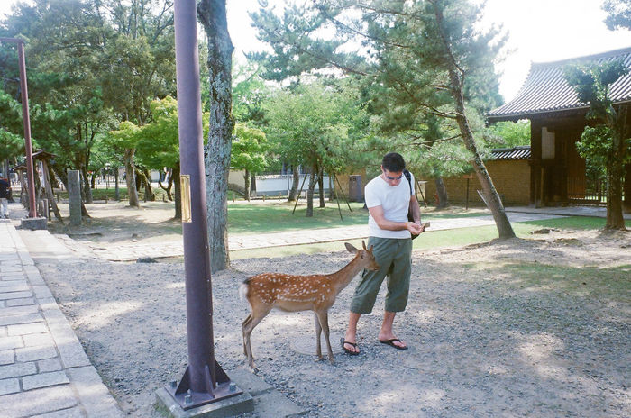 Tree Full Length Day One Person Casual Clothing Adults Only Outdoors Only Women One Woman Only Standing One Animal Adult Real People Women People Pets Nature Young Adult One Young Woman Only Sky People Photography Deer Park Nara,Japan Nara