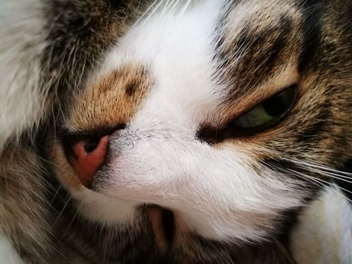 my Prince One Animal Animal Themes Close-up Domestic Animals Animal Head  Pets Animal Body Part Whisker Animal Eye Cat Mammal Domestic Cat Feline Animal Nose Extreme Close Up Snout Whiskers Focus On Foreground Animal Animal Hair Day Cats 🐱 Cats Catselfie Cats Lovers