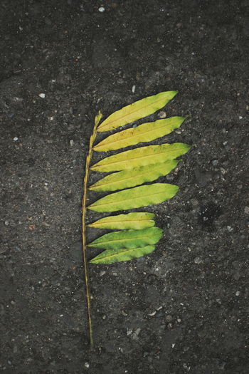 Close-up high angle view of yellow leaf