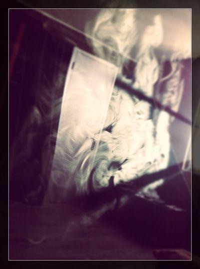 Art Gallery Smoke Smoking