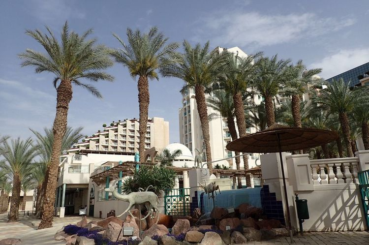 Palm Tree Architecture Building Exterior City Outdoors Travel Destinations Eilat Israel Hotels Area