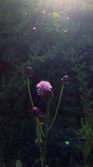 Flower Nature EyeEm Nature Lover The Environmentalist – 2014 EyeEm Awards