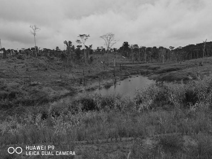 Foto Monocromática simples apenas pra testar o poder do sensor Monocromático em fotos rápidas do Huawei P9 Lente Summarit Agriculture Rural Scene Landscape Growth Outdoors Day Nature First Eyeem Photo