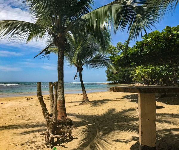 Been There. Puerto Viejo, Limón Costa Rica... Pura Vida Ticos!!! EyeEm Best Shots Caribbean Costa Rica Beach Palm Tree Tree Sand Sea Scenics Beauty In Nature Nature Tree Trunk Tranquility Tranquil Scene Horizon Over Water Water Shore Sky Day Outdoors Idyllic Sunlight No People