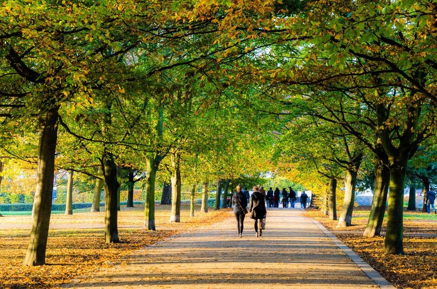 People walking on an avenue of autumnal trees in Greenwich Park. Walking Autumn Fall Autumnal Seasonal People People Walking  Season  Trees Fallen Leaves Back View Many People Recreational  Active Plants Rear View Real People Leafy Footpath Avenue Of Trees Avenue Canopy Of Trees Canopy Walk Way Path